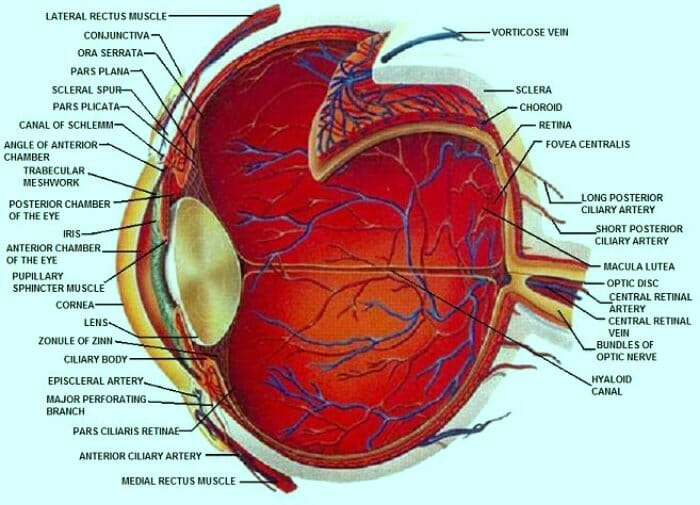 Diagram of the eye structure